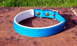 Small Translucent Mid Blue Dog Collar With BETA® White Underlay-0