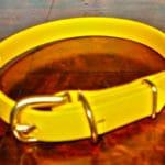 Extra Small BETA® Yellow Dog Collar-0