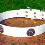 Large White Dog Collar With Navajo Blue Flower Concho-0