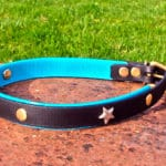 Large BETA® Black Dog Collar With Translucent Turquoise Underlay, Stars and Rivets-0