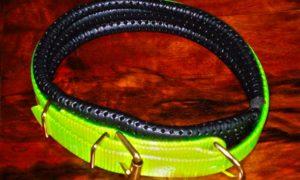 Medium Translucent Yellow Dog Collar With Padded Backing-0