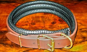 Large BETA® Brown Dog Collar With Padded Backing-0