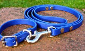 Small BETA® Blue Dog Collar-0