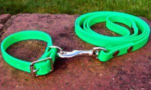 Small BETA® Light Green Dog Collar-0