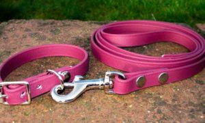 Small BETA® Burgundy Dog Collar-0