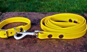 Small BETA® Yellow Dog Collar-0