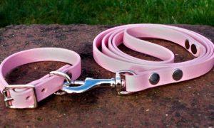 Small BETA® Pink Dog Collar-0