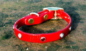 Extra Small Translucent Red Dog Collar With Red and White Rhinestones-0