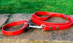 Small BETA® Red Dog Collar-0