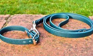 Small BETA® Green Dog Collar-0