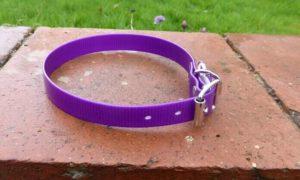 DeZignA - Dog Collar