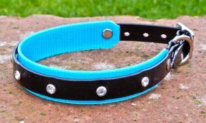 Small BETA® Black Dog Collar With Turquoise Underlay-0