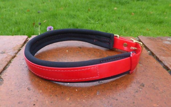 Agility Dog Collar-1345