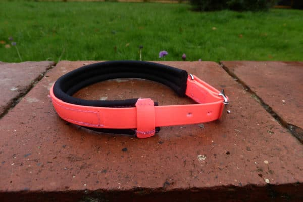 Agility Dog Collar-1357