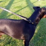 Martingale Collar and Lead Combination-1091
