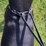 Martingale Collar and Lead Combination-1094