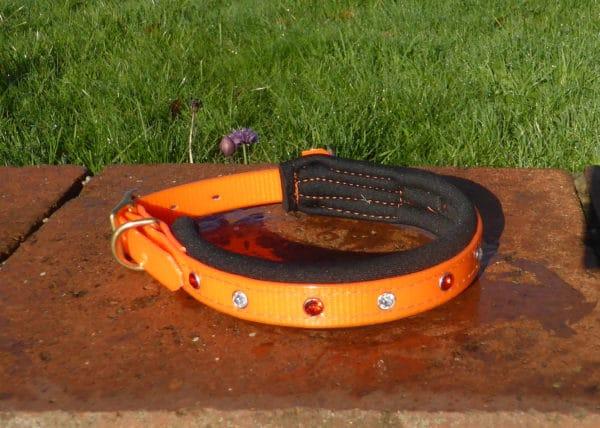 Padded Bling Agility Dog Collar-1334