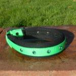 Padded Bling Agility Dog Collar-1337