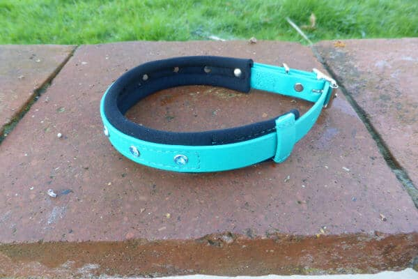 Padded Bling Agility Dog Collar-1341