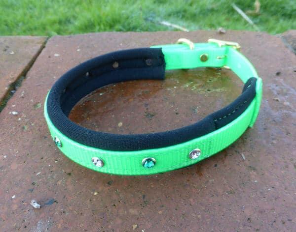 Padded Bling Agility Dog Collar-1343