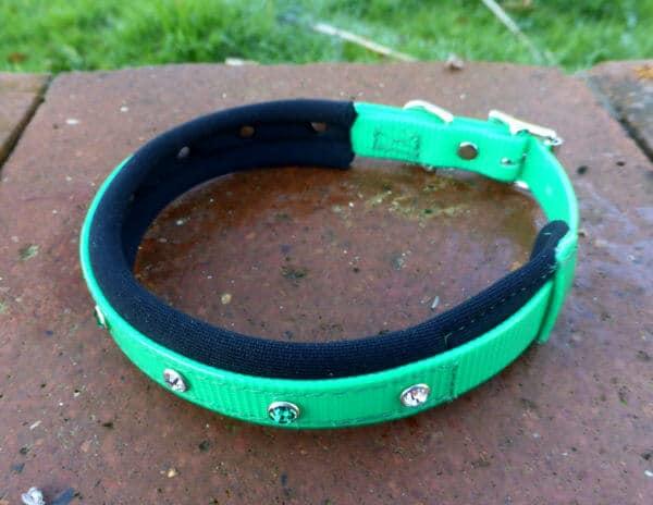 Padded Bling Agility Dog Collar-1344