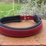 Padded Dog Collar-1382