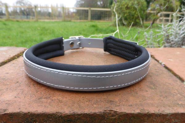 Padded Dog Collar-1385
