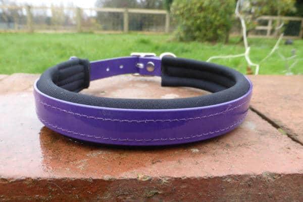 Padded Dog Collar-1384