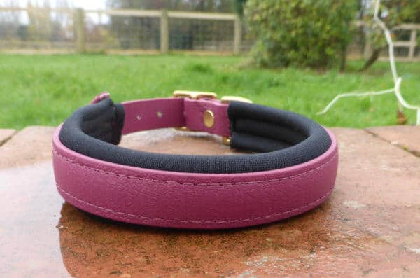 Padded Dog Collar-1383