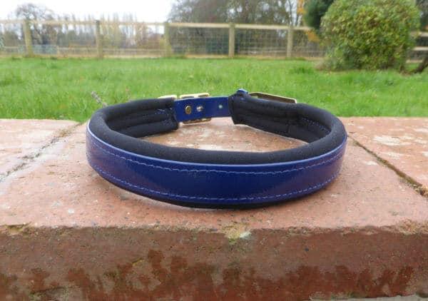 Padded Dog Collar-1387